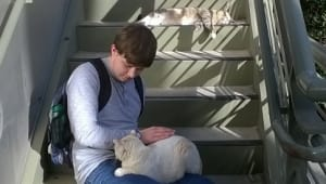 Continued Care for Campus Kitties during COVID-19