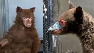 Help the Wildlife Disaster Network rescue injured animals