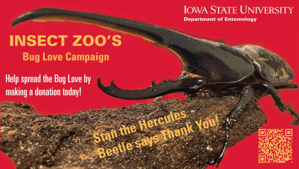 Insect Zoo: Love Our Bugs! Image