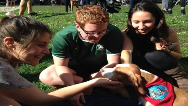 Growing the Pause for Paws Therapy Program Image