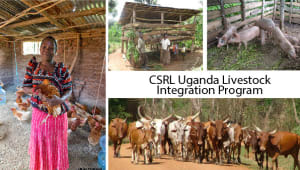 CSRL Uganda Livestock Integration Program