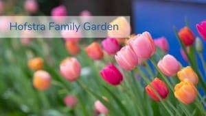 Hofstra Family Garden