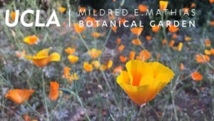 Oasis in the City: Mildred E. Mathias Botanical Garden