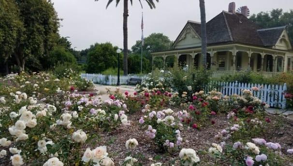Fullerton Arboretum Garden Restoration Image
