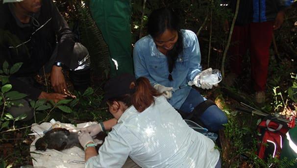 Lemur Conservation Image