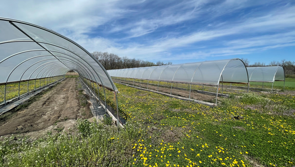 Bring a High Tunnel Greenhouse to KUMC Image