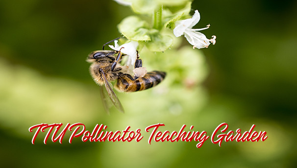 Native Plant and Pollinator Teaching Garden Image