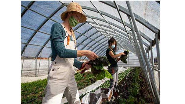 Desert Farming Initiative Image