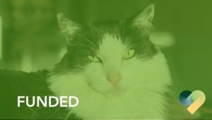 Cal Poly Cat Program