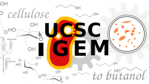 Engineering the Future of Biofuel: UC Santa Cruz iGEM 2015