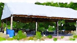 The UTSA Butterfly Pavilion