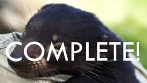 Save our Tasmanian devils