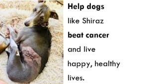 Canine Cancer Project