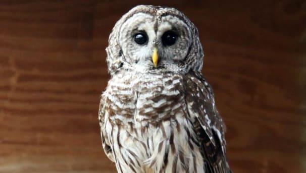 We Strive to Conserve Oklahoma Wildlife Image