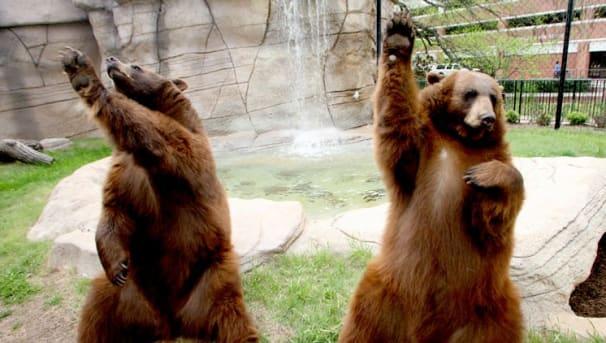 The Bear Habitat Enrichment Initiative Image