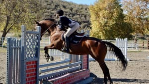 UCLA Equestrian: Galloping Towards Nationals