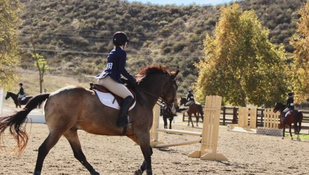 UCLA Equestrian: Galloping Towards Nationals Image