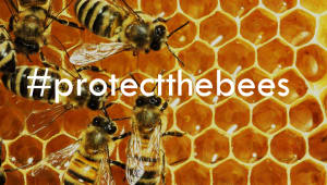 #protectthebees