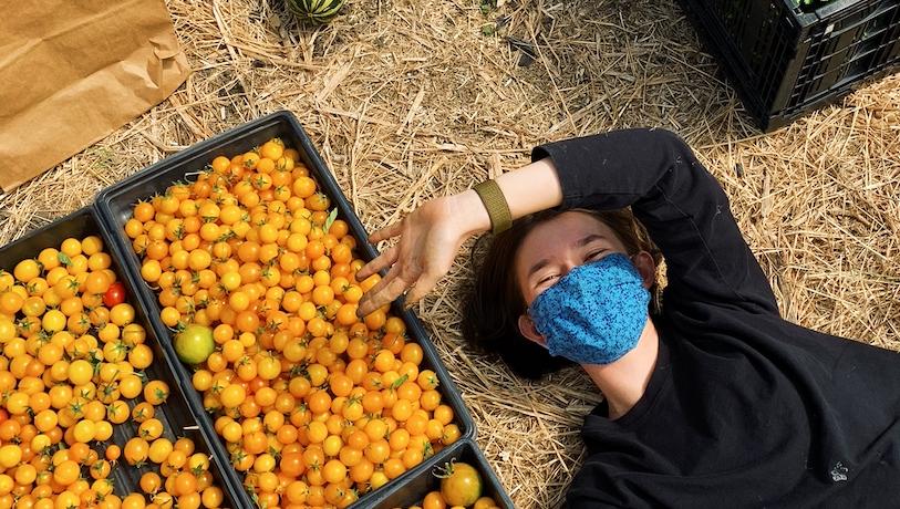 Tomato Harvest!