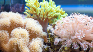 Help Us Build A Coral Farm!