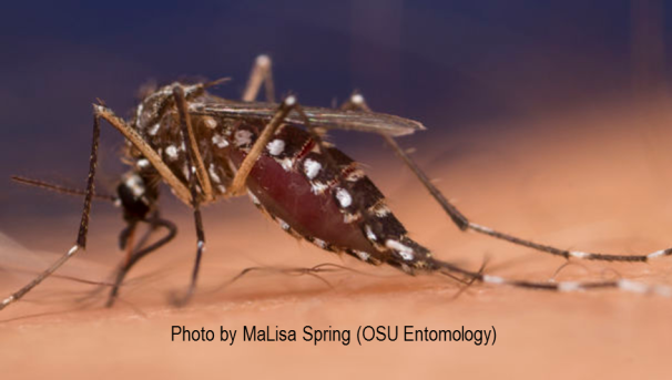Controlling Mosquito Vectors of Zika and Other Diseases Image