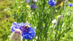 WheaFarm: Wheaton College Community Garden