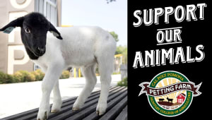 Support the Petting Farm