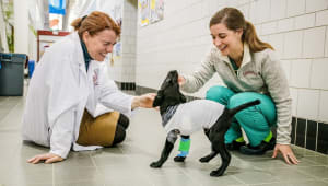Cornell Annual Fund for the Veterinary College