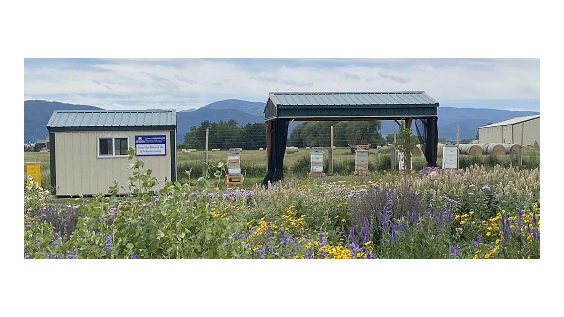 MSU's Honey Bee Research Site and Pollinator Garden