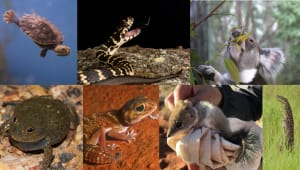 50 in 5 - Mapping the genomes of Australia's threatened species