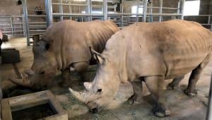 Save the White Rhino