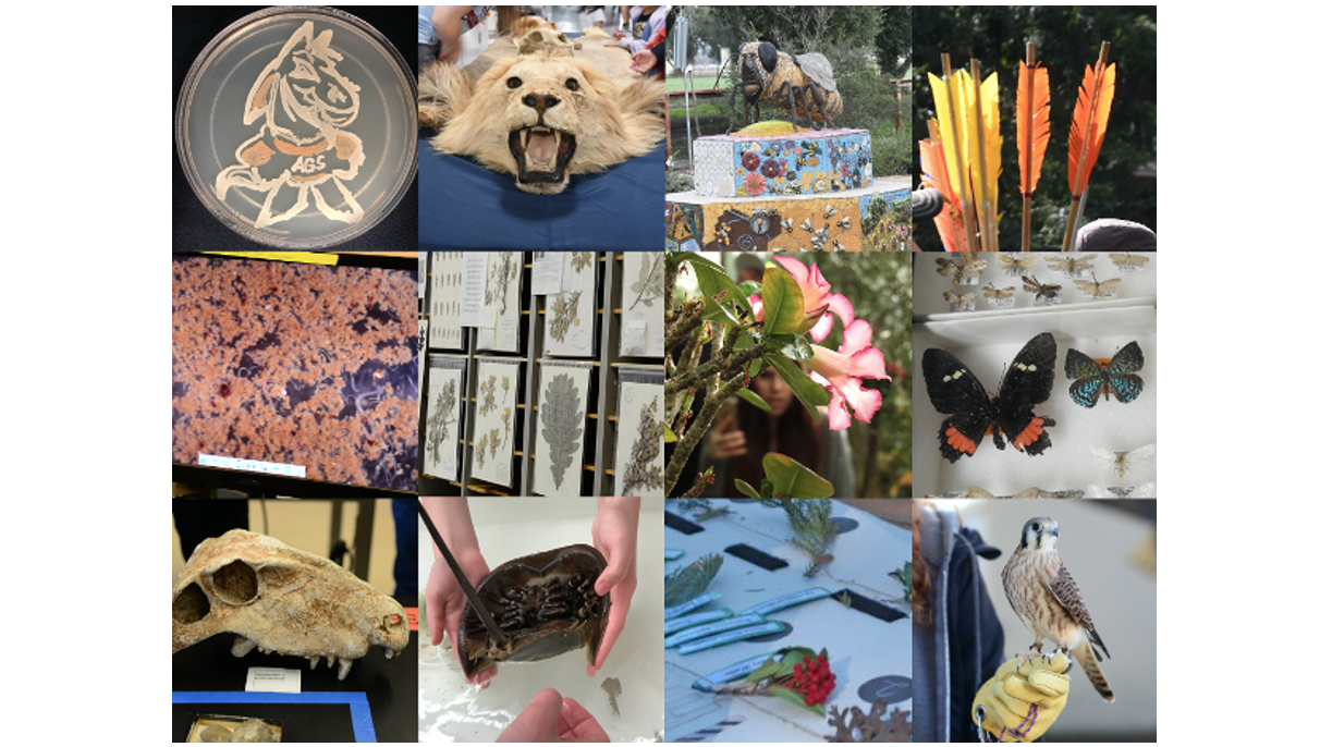 Biodiversity Museum Day Collections Collage