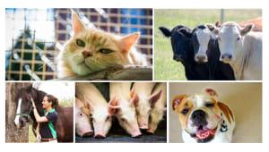 University of Sydney's Online Mendelian Inheritance in Animals