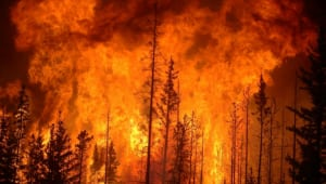 FUEGO:  Early Detection and Management of Wild Fires