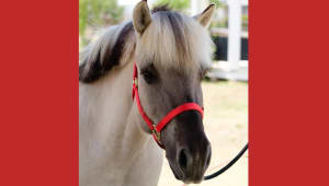 Texas Tech Therapeutic Riding Center- Footsteps to Fjords