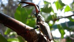 Patagonia Beetle Biodiversity