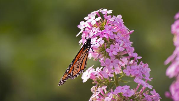 Botanic Buzzline Image