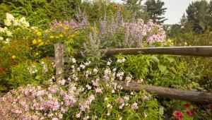 Botanic Buzzline
