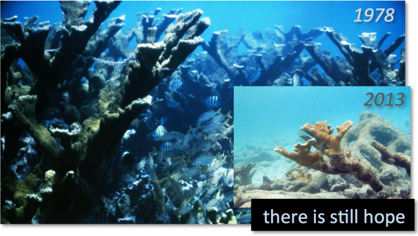 Caribbean reefs through the ages Image