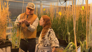 Tufts Food Lab : Gathering Grain Research in the Field