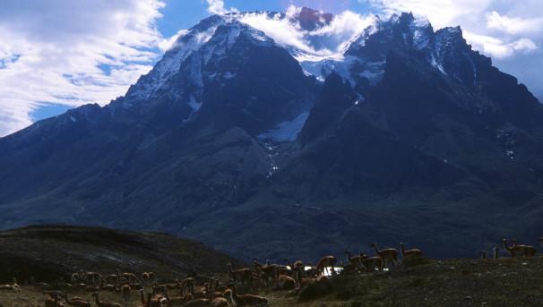 Patagonia Beetle Biodiversity Image