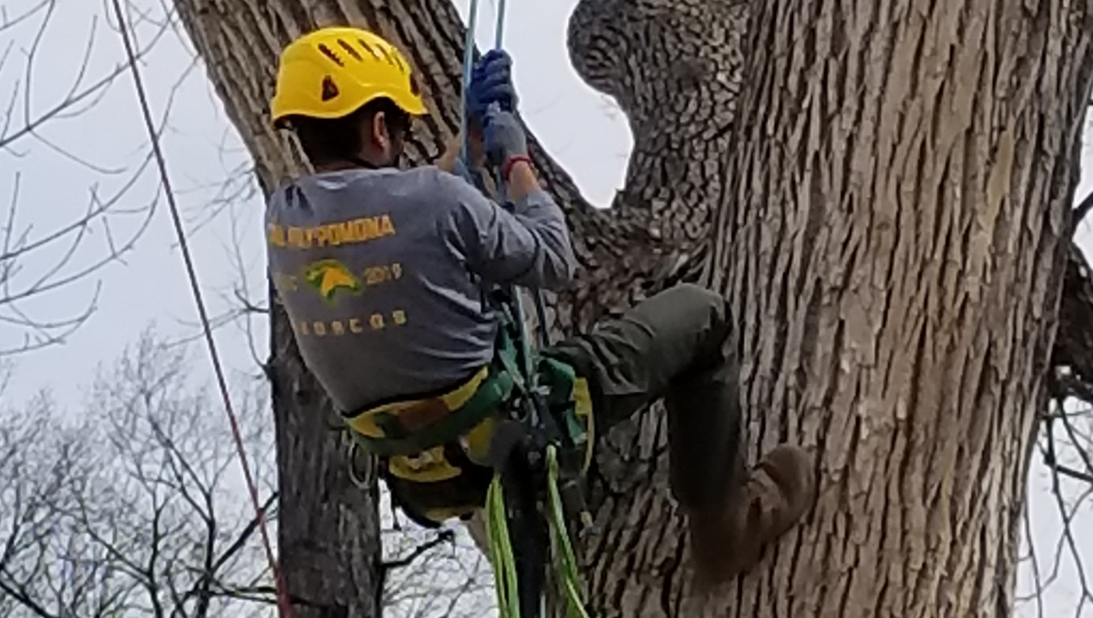 Arboriculture Competition