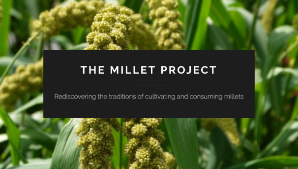The Millet Project: Where Have All the Grains Gone? Image