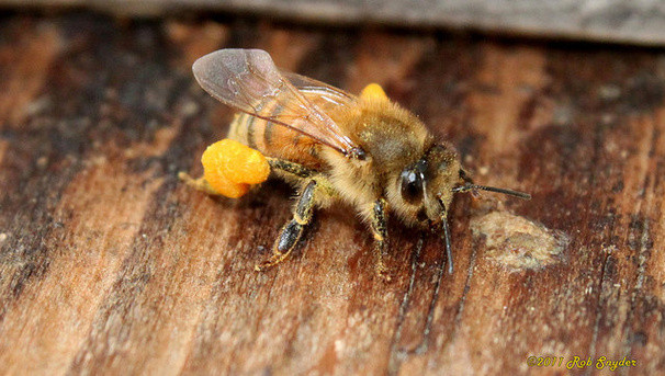 Sentinel Hives: Guardians of Honey Bees Image