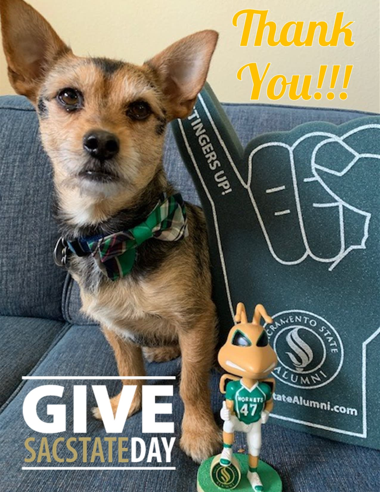 Image for Update: The most successful Give Sac State Day yet, thanks to YOU!