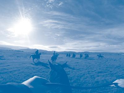 Equine Horsemanship Tile Image