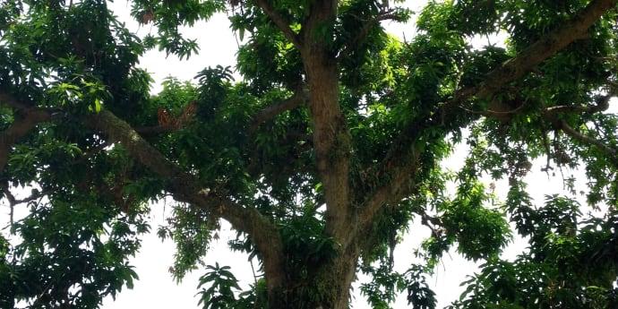 Tanmese - A kívánságfa