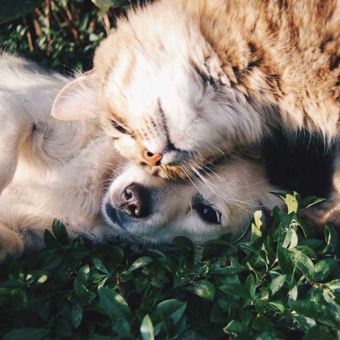 5 fun facts you didn't know about pheromones, cats and dogs