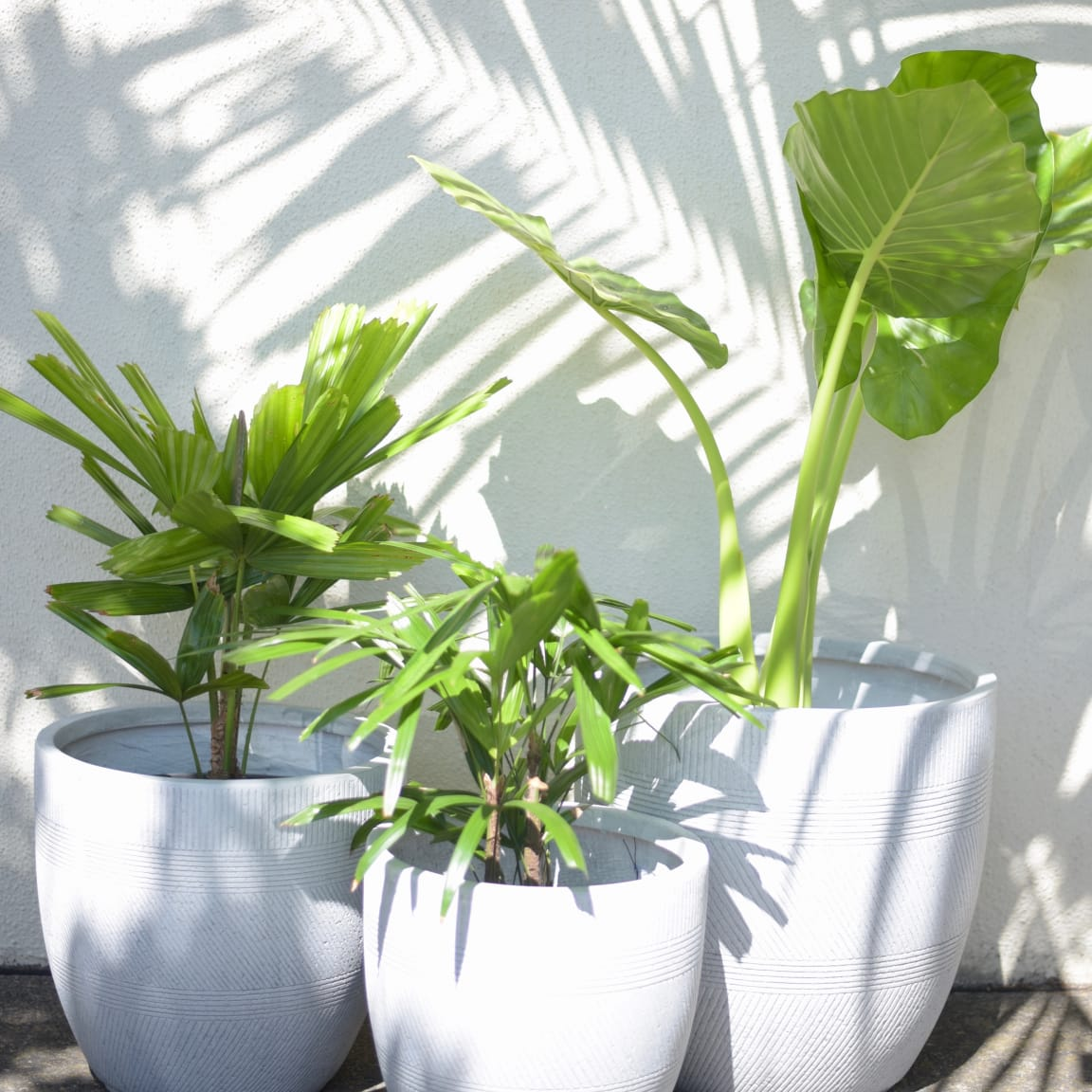 Gro Urban Oasis: 6 essential tips for container gardening