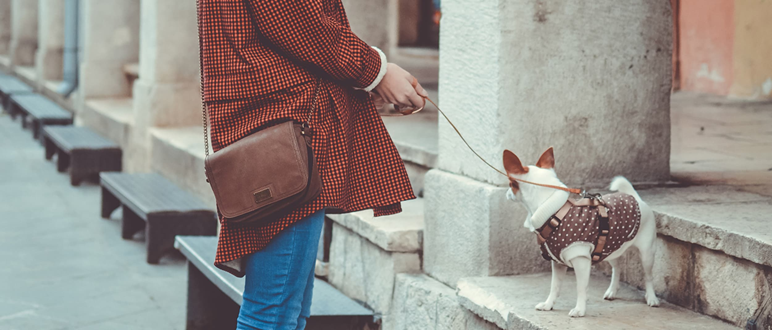 Luxe up your Dogue: give your pet the 5 star treatment